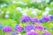 6月20日は花の日・子どもの日合同礼拝です。